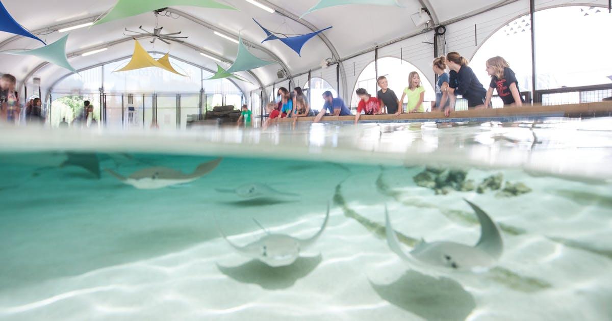 Stingray Touch | Shedd Aquarium