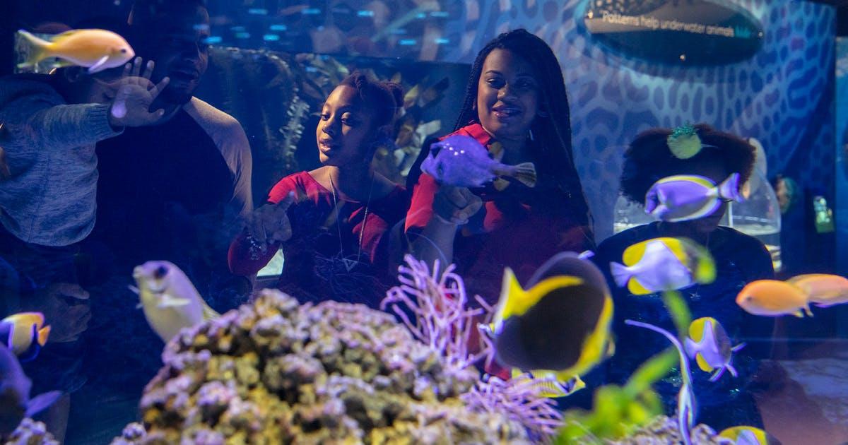 Shedd Members | Shedd Aquarium